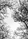 Branches without leaves Royalty Free Stock Photography