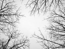 Branches without leaves Royalty Free Stock Image