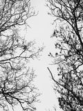 Branches without leaves Royalty Free Stock Images