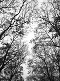 Branches without leaves Royalty Free Stock Photos