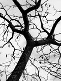 Branches without leaves Stock Photo