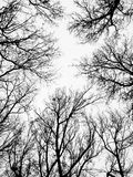 Branches without leaves Stock Images