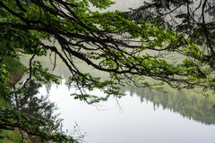 Branches with leaves on blurred background of forest lake. Tree branches with leaves  on blurred abstract background of forest lake in fog Stock Images