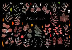 Branches and leaves, fall, spring, summer. Botanical illustration in bright color on black background vector illustration