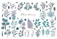Branches and leaves, fall, spring, summer. Vintage botanical illustration, floral elements in blue royalty free illustration