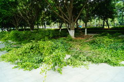 Branches and leaves on the ground Royalty Free Stock Photography