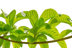 Branches and leaves isolated on white background. File contains a clipping path Stock Photo