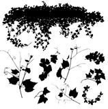 Branches and leaves of ivy. Vector clipart depicts the ivy. He will decorate the wall of a house, fence or the other Stock Images