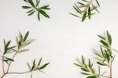 Branches and leaves of olive tree on white background with texture royalty free stock image