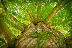 Branches, Leaves, Perspective Royalty Free Stock Images