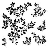 Branches leaves silhouette set Royalty Free Stock Images