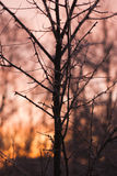Branches without leaves, thorns, cold winter morning Royalty Free Stock Photo