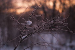 Branches without leaves, thorns, cold winter morning Stock Photo