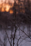 Branches without leaves, thorns, cold winter morning Royalty Free Stock Image