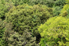 Branches and leaves of trees, miniature style Stock Photo