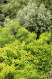 Branches and leaves of trees, miniature style Royalty Free Stock Photography