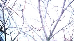 Branches without leaves in winter snow sweeps. Outdoors stock video footage