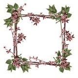 branches lila räckvidd Fotografering för Bildbyråer