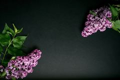 Branches of lilac on a black background royalty free stock images