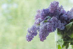 Branches of lilac flowers Royalty Free Stock Photos