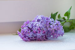 Branches of lilac flowers Stock Image