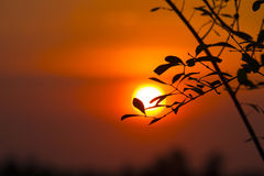 Branches with little leaves  of sunset sky Royalty Free Stock Photos