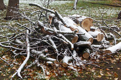 Branches and logs on grass under the first snow Stock Image