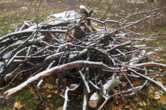 Branches and logs on grass under the first snow Stock Photos