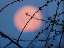 full moon through the branches royalty free stock photography