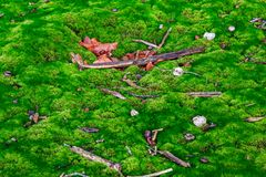 Branches lying on the ground in a forest in autumn Royalty Free Stock Photo