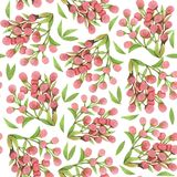 Branches of Mimosa. Branches of pink Mimosa. Seamless watercolor pattern stock illustration