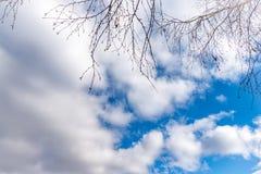 Branches minces d'un bouleau sans feuilles contre le ciel nuageux bleu photographie stock libre de droits