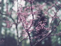 Branches with miniature purple flowers. Branches with miniature light purple and pink flowers stock photo