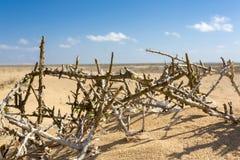 Branches mortes sur le sable de la plage en La Guajira, Colombie Images libres de droits