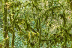 Branches with moss and algae. Royalty Free Stock Photography