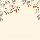 Branches of mountain ash in the frame Royalty Free Stock Image