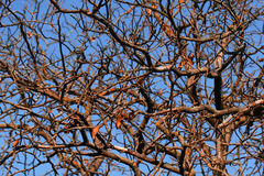 Branches of naked deciduous trees royalty free stock images