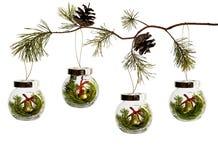 Branches naturelles de l'arbre de Noël avec un jouet en verre de Noël d'isolement sur le fond blanc photo stock