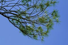 Branches and needles. Of an evergreen tree Stock Photos