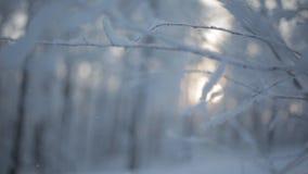 Branches neigeuses gelées clips vidéos