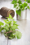 Branches of nettle Stock Photo
