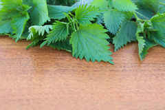 Branches of nettle Royalty Free Stock Images