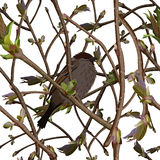 Branches with new green shoots or sprout and bird. Seamless background Royalty Free Stock Photo