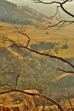 Branches. In a nice canyon area in Romania Sebes County Rapa Rosie red sand Royalty Free Stock Photos