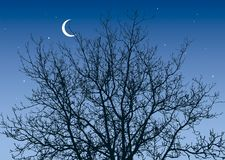 Branches in the night sky Royalty Free Stock Photos