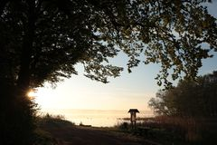 Free Branches Of Oak On The Shore A Lake At Sunrise Silhouettes Trees Edge During Stock Photo - 147338070