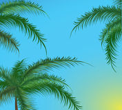 Branches Of Palm Trees Against The Sky Stock Image