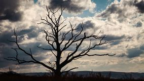 Branches of Old Tree Against Rainy Clouds Background. Scenic old tree branches silhouette on dramatic clouds background. Time lapse stock video footage