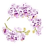 Branches orchids dots purple and white flowers tropical plant Phalaenopsis on a white background set first vintage vector botan. Ical illustration for design Royalty Free Stock Images