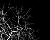 Branches over black Royalty Free Stock Photos